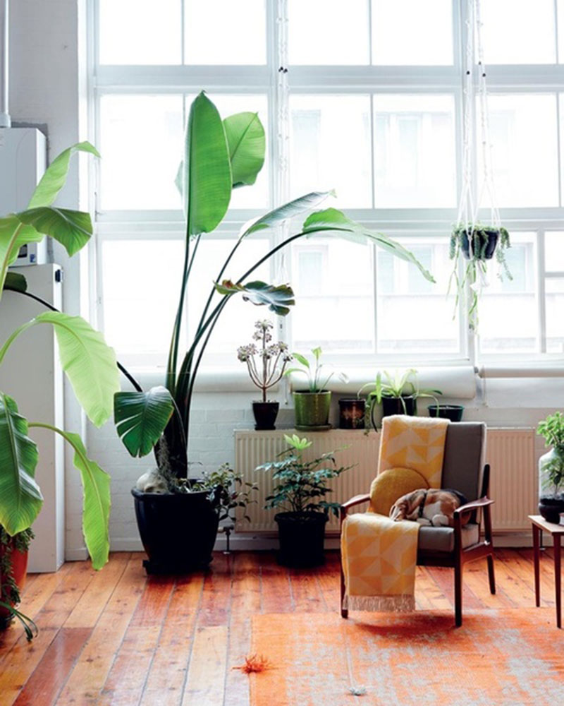 Indoor Plants - Homeworld Helensvale Blog